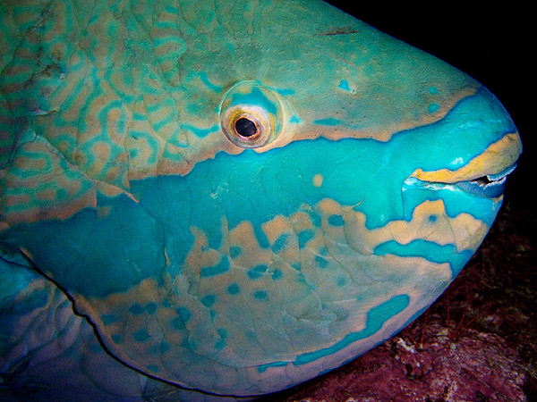 بالصور صور جزر فرسان , تعرفوا علي اجمل بقاع الارض جمالا 2997 13