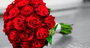 بالصور اجمل صور بوكيه ورد , انواع الورود للعشاق والاحباب 3132 12 310x165