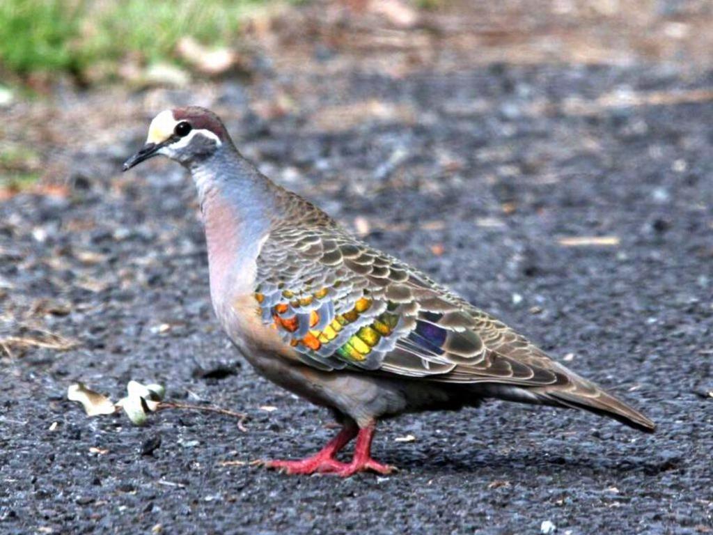 بالصور اجمل صور للعصافير , جمال العصافير تتجمع في هذه الصورة