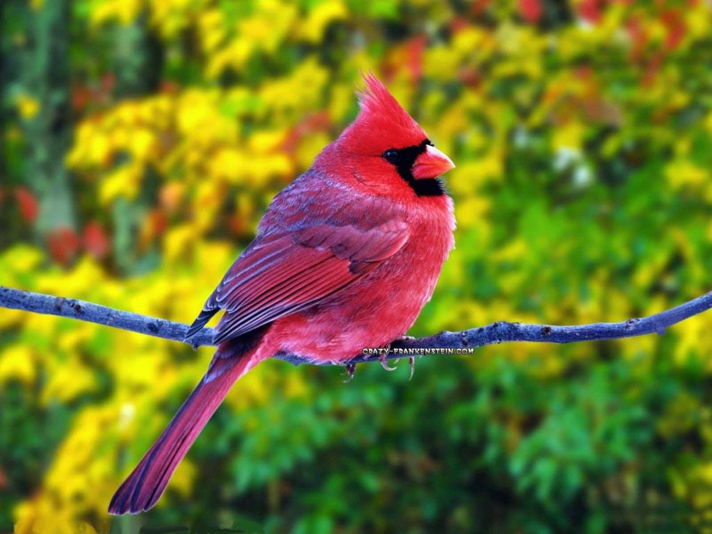 بالصور اجمل صور للعصافير , جمال العصافير تتجمع في هذه الصورة 3608 10
