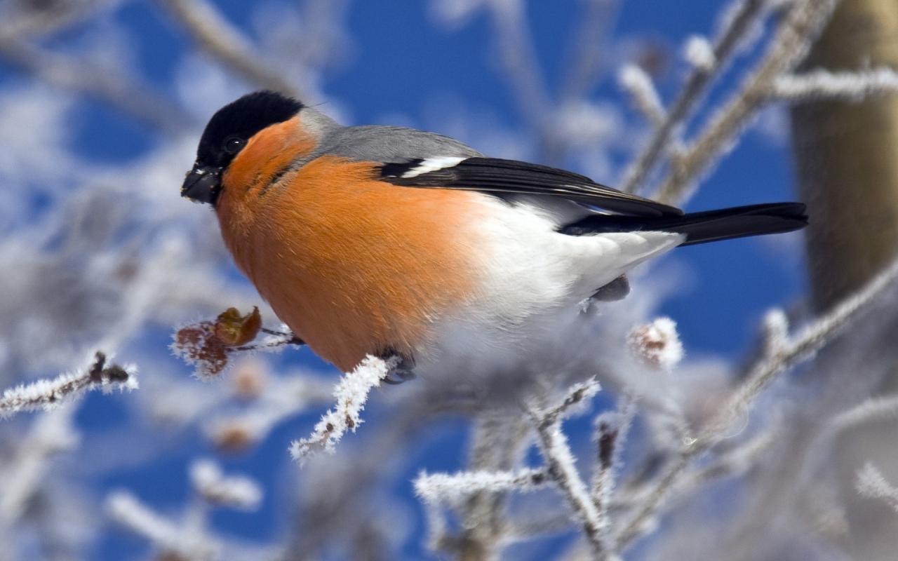 بالصور اجمل صور للعصافير , جمال العصافير تتجمع في هذه الصورة 3608 11