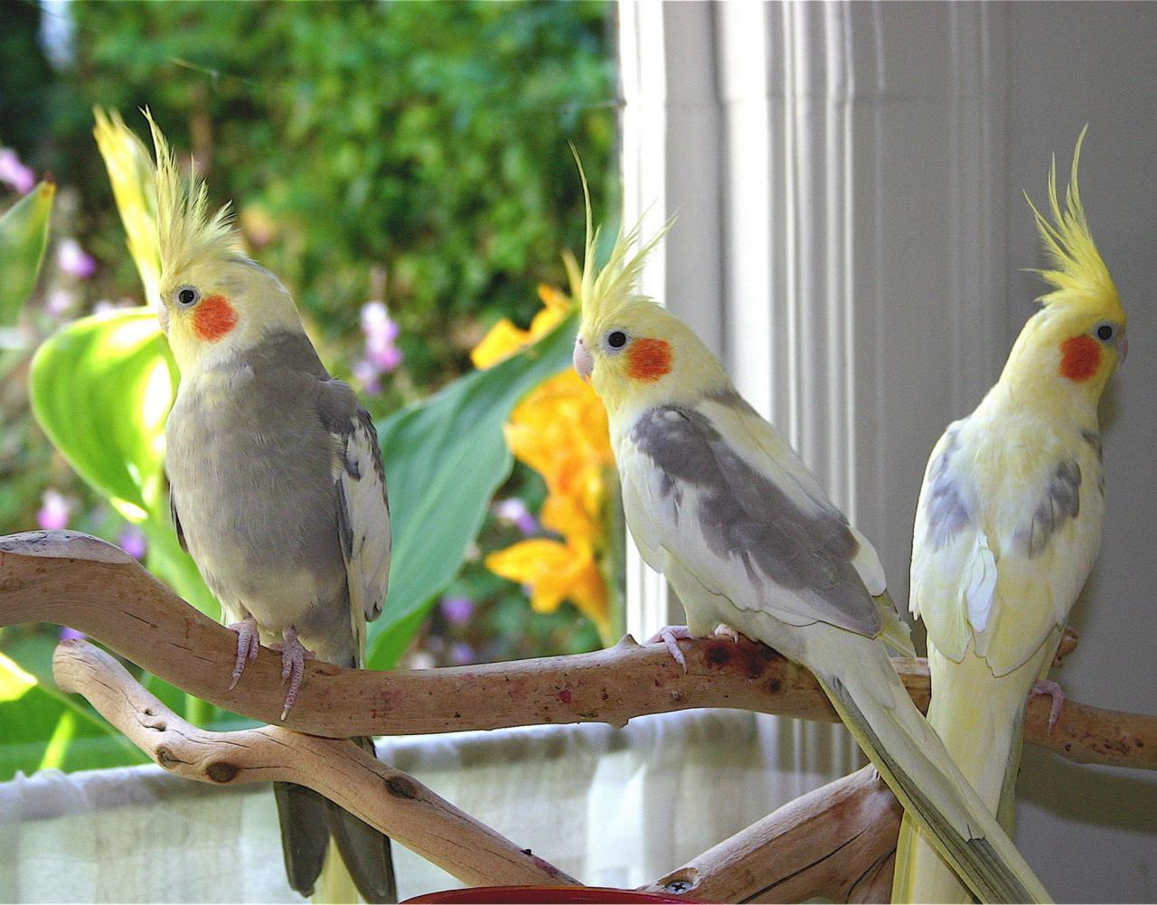 بالصور اجمل صور للعصافير , جمال العصافير تتجمع في هذه الصورة 3608 12