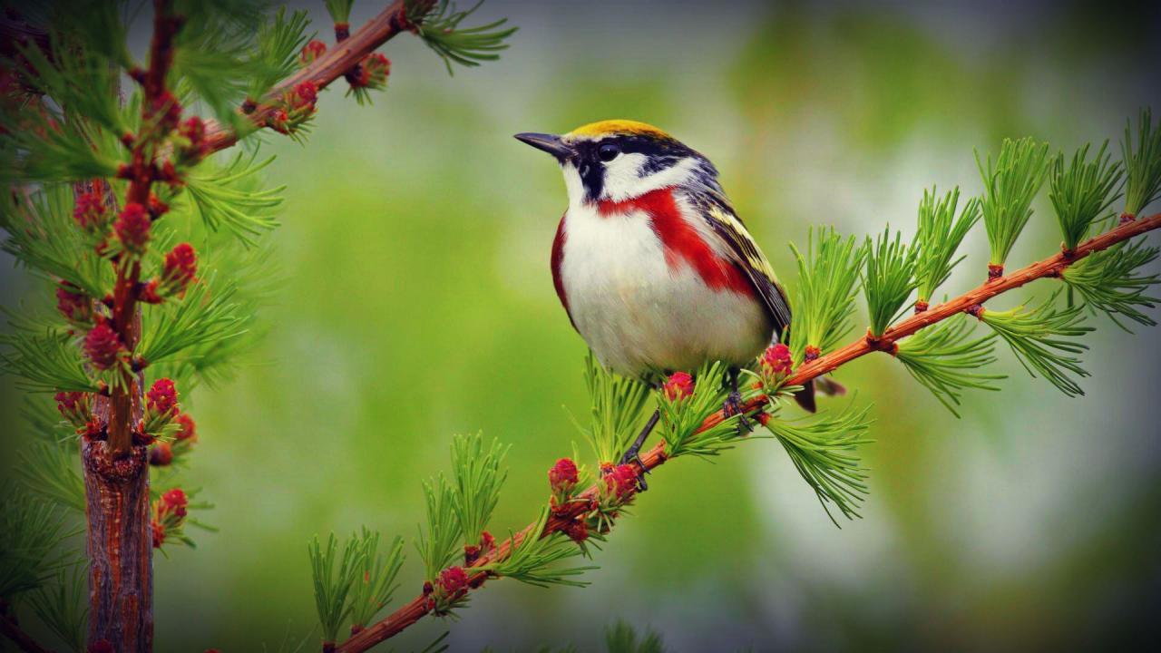 بالصور اجمل صور للعصافير , جمال العصافير تتجمع في هذه الصورة 3608 13