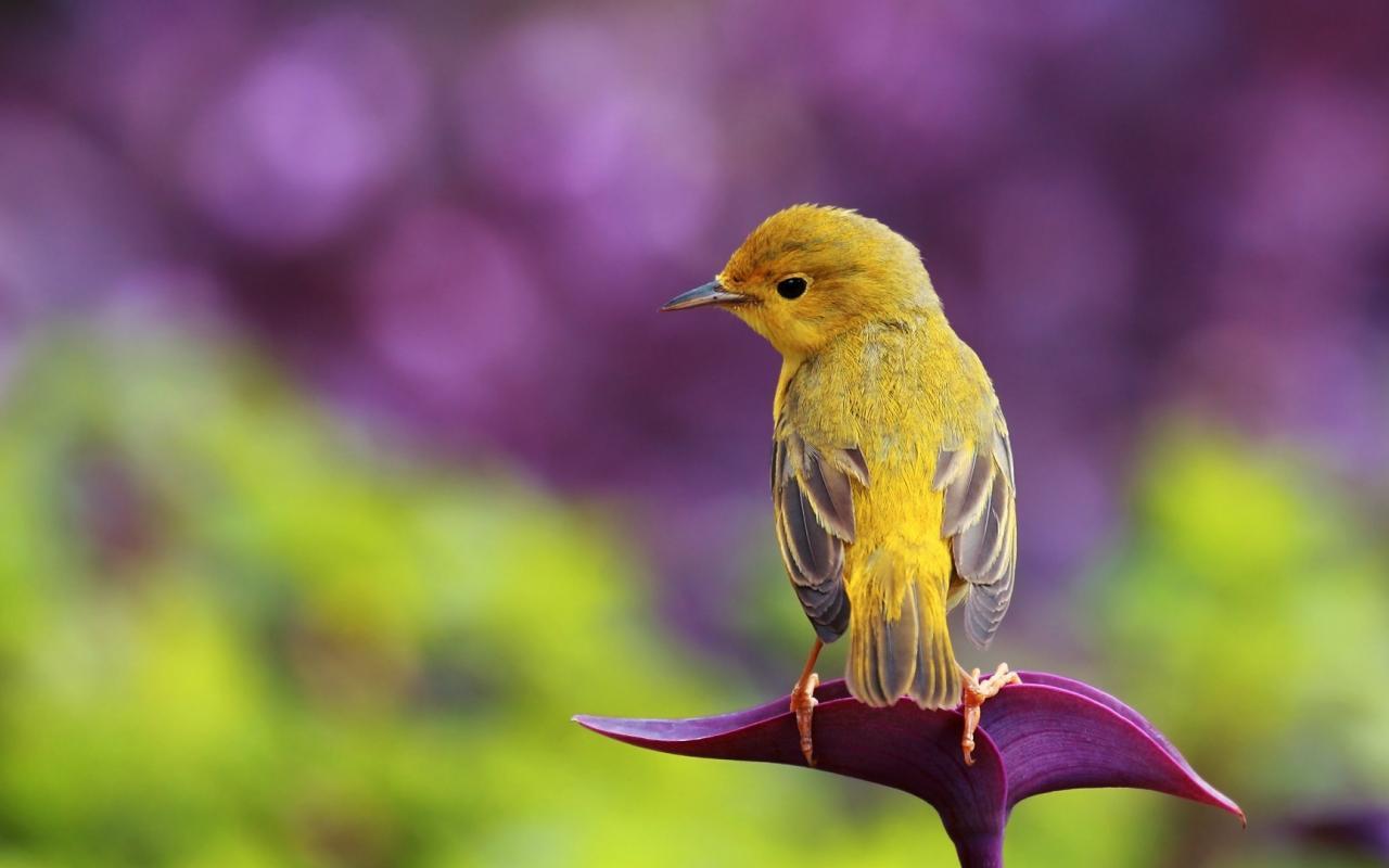 بالصور اجمل صور للعصافير , جمال العصافير تتجمع في هذه الصورة 3608 14