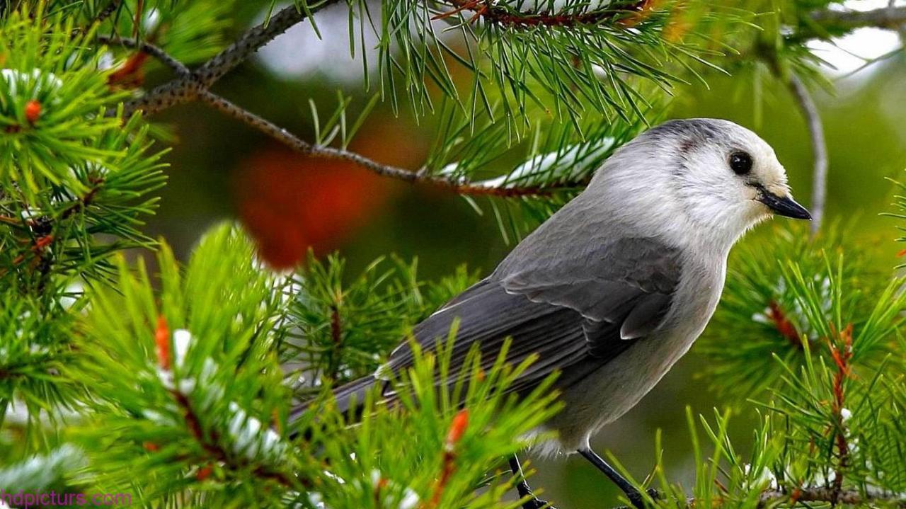 بالصور اجمل صور للعصافير , جمال العصافير تتجمع في هذه الصورة 3608 15
