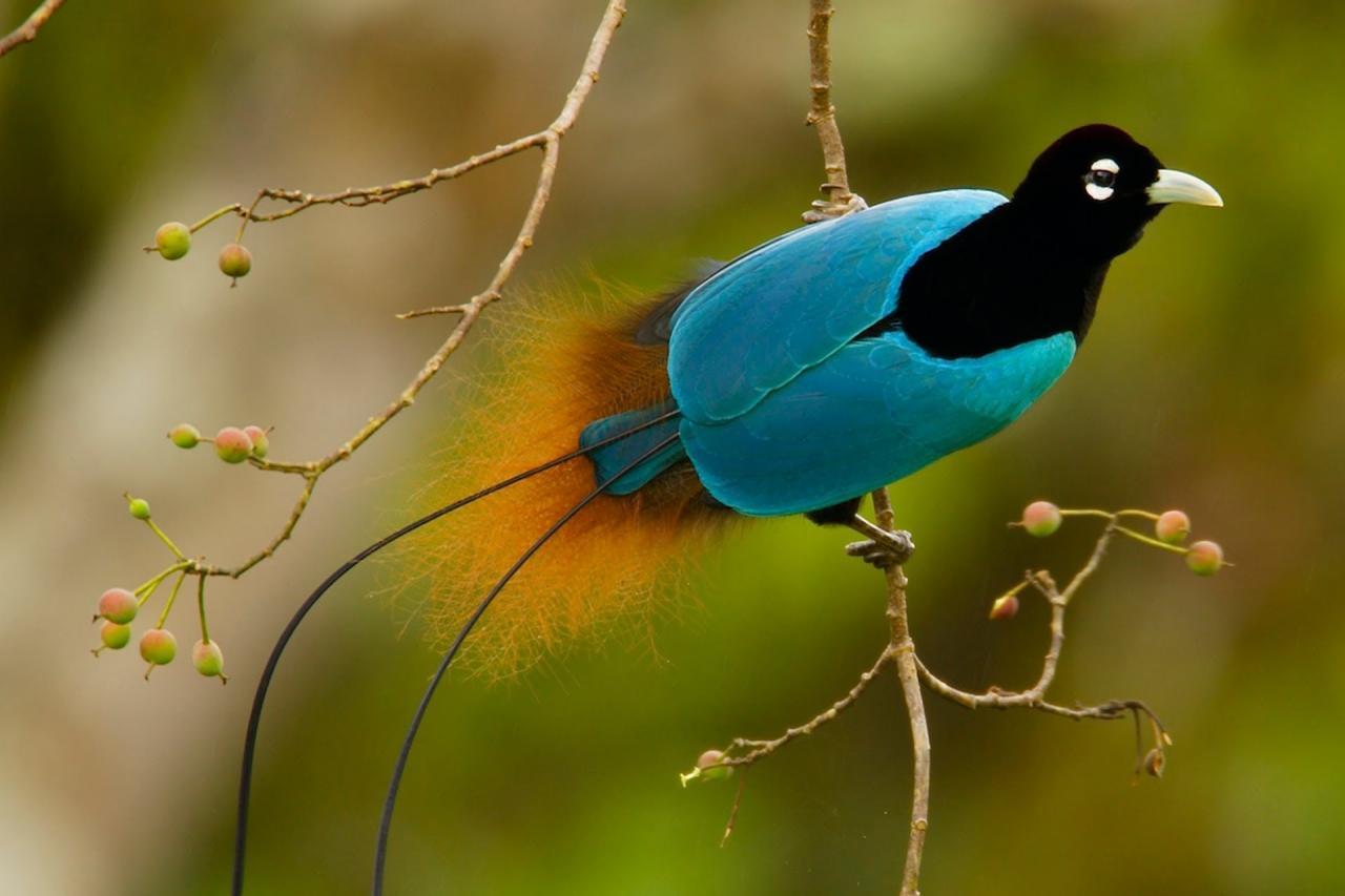 بالصور اجمل صور للعصافير , جمال العصافير تتجمع في هذه الصورة 3608 16