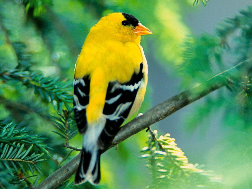 بالصور اجمل صور للعصافير , جمال العصافير تتجمع في هذه الصورة 3608 17