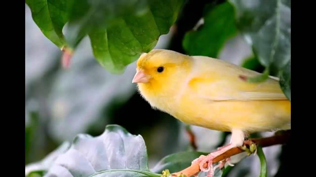 بالصور اجمل صور للعصافير , جمال العصافير تتجمع في هذه الصورة 3608 18