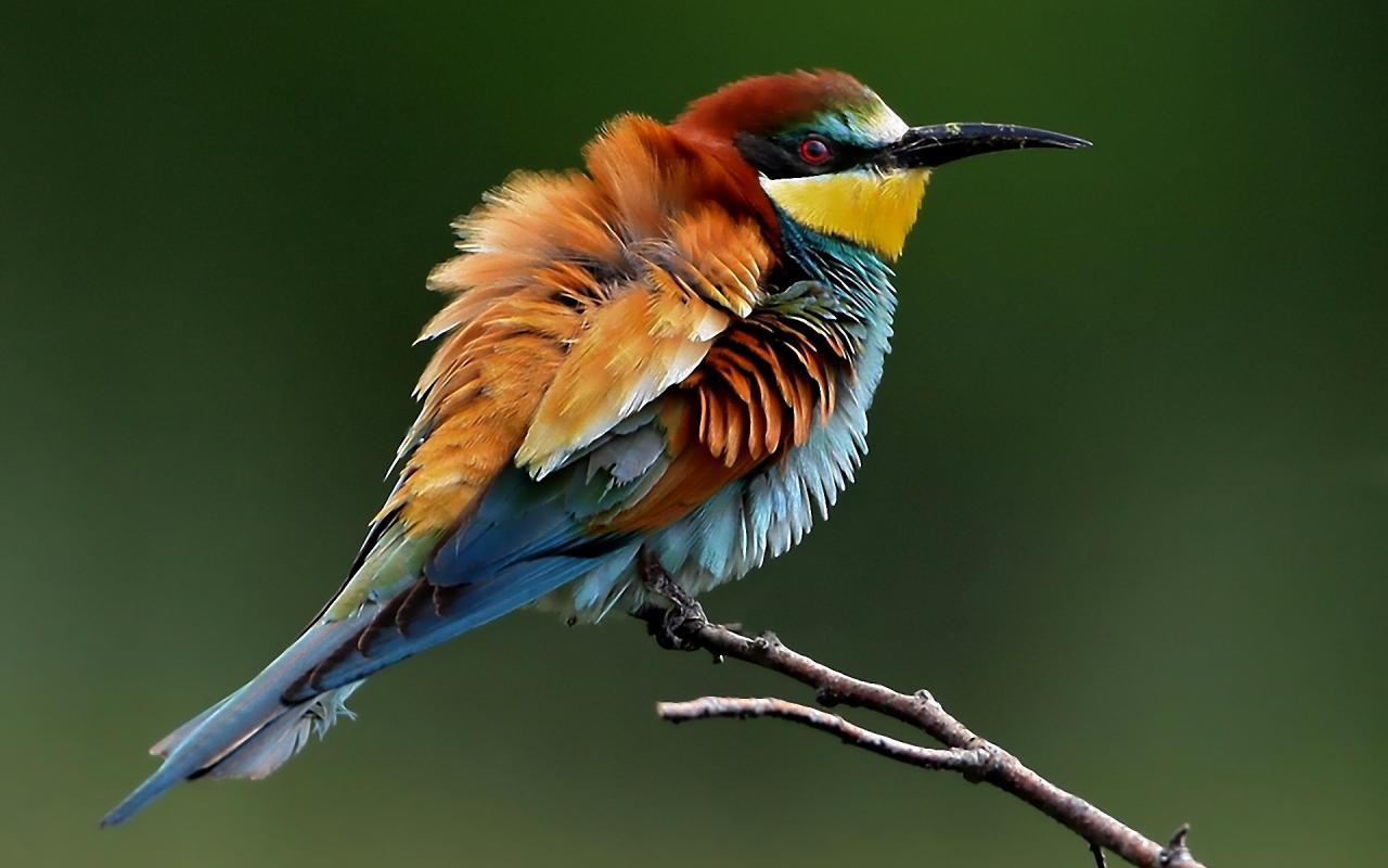 بالصور اجمل صور للعصافير , جمال العصافير تتجمع في هذه الصورة 3608 19