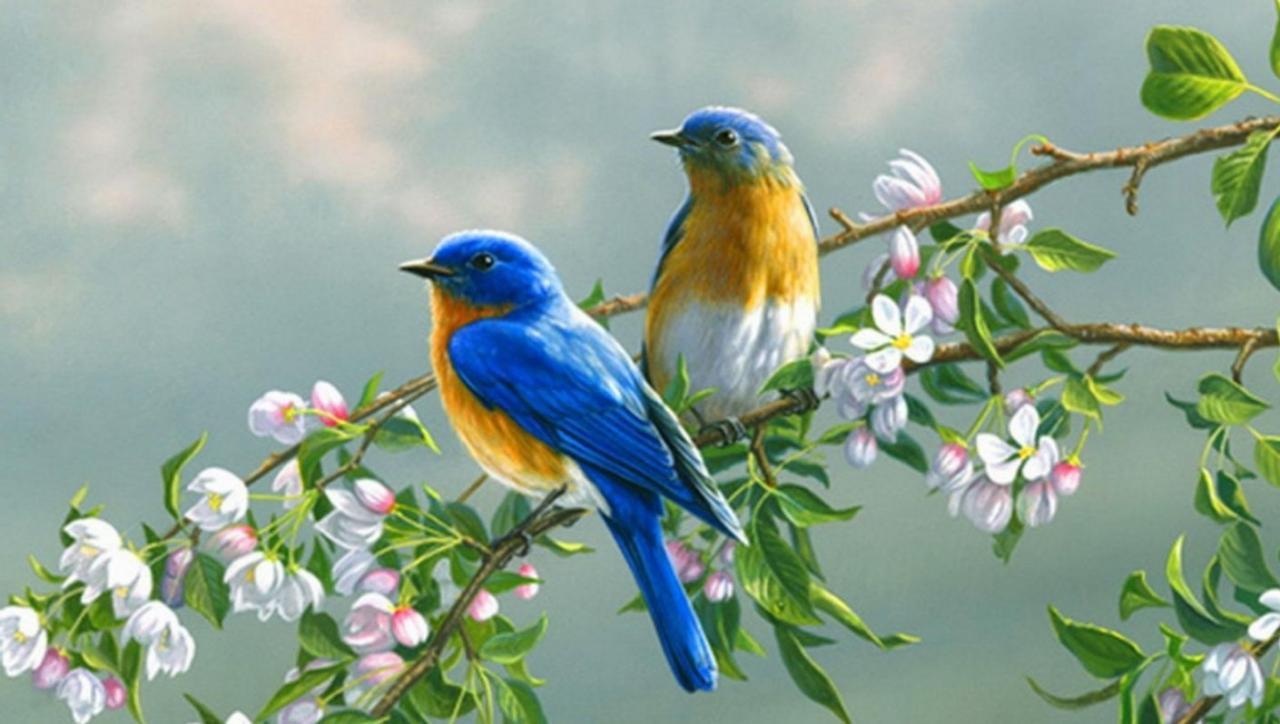 بالصور اجمل صور للعصافير , جمال العصافير تتجمع في هذه الصورة 3608 2