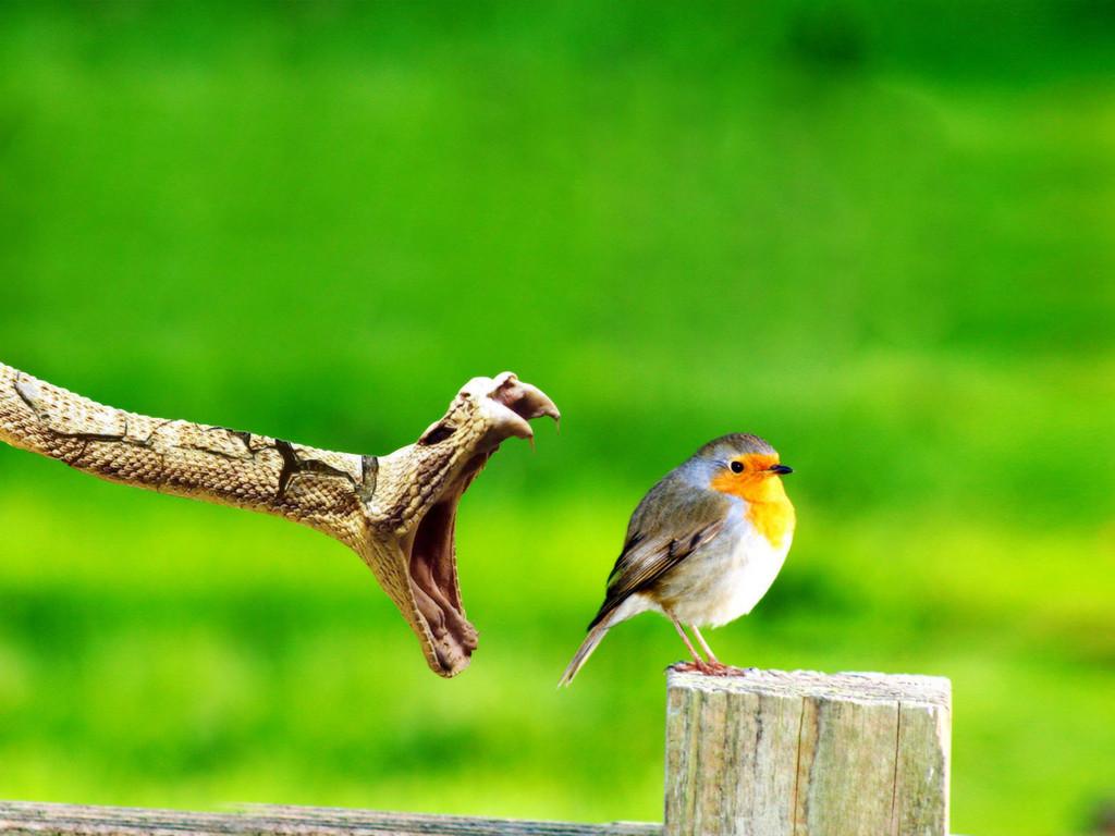 بالصور اجمل صور للعصافير , جمال العصافير تتجمع في هذه الصورة 3608 3