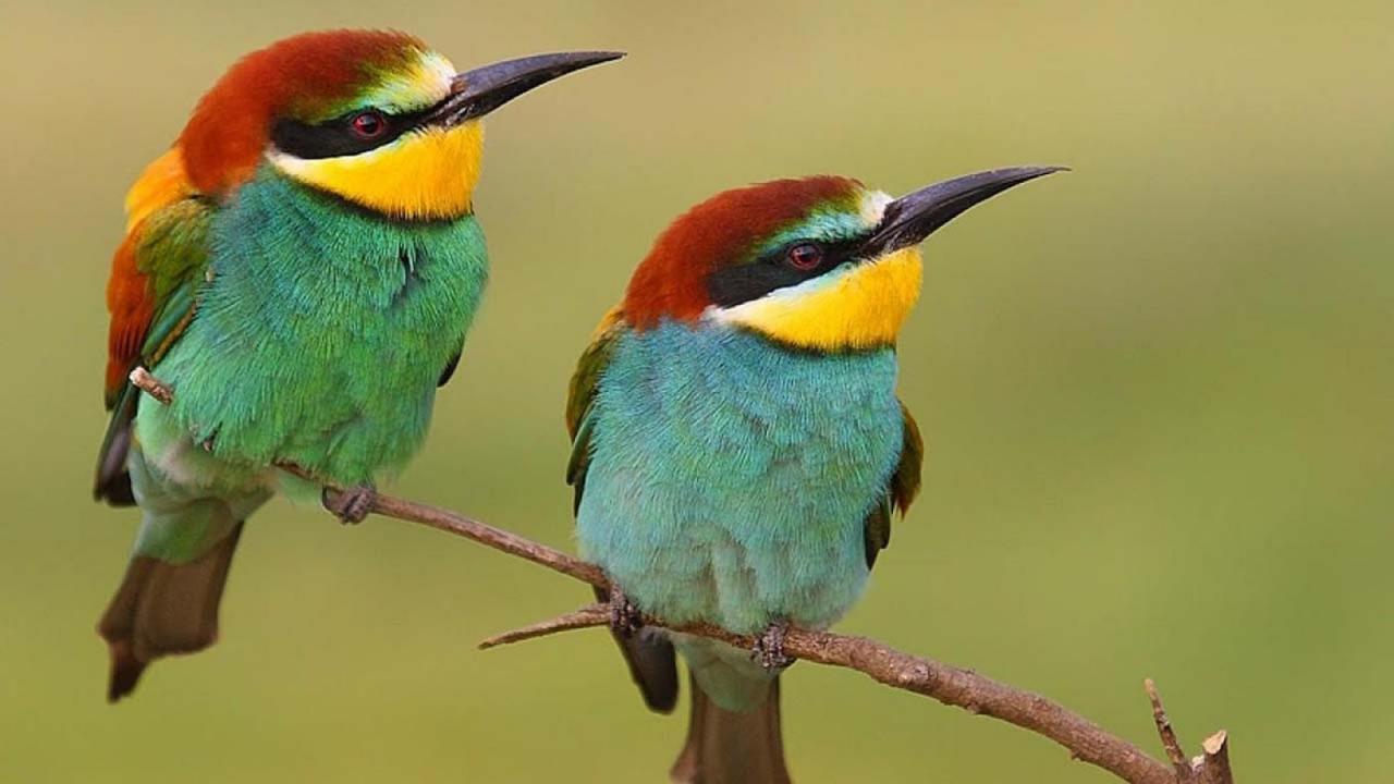بالصور اجمل صور للعصافير , جمال العصافير تتجمع في هذه الصورة 3608 4