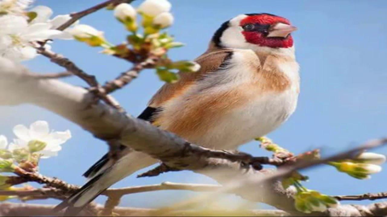 بالصور اجمل صور للعصافير , جمال العصافير تتجمع في هذه الصورة 3608 5