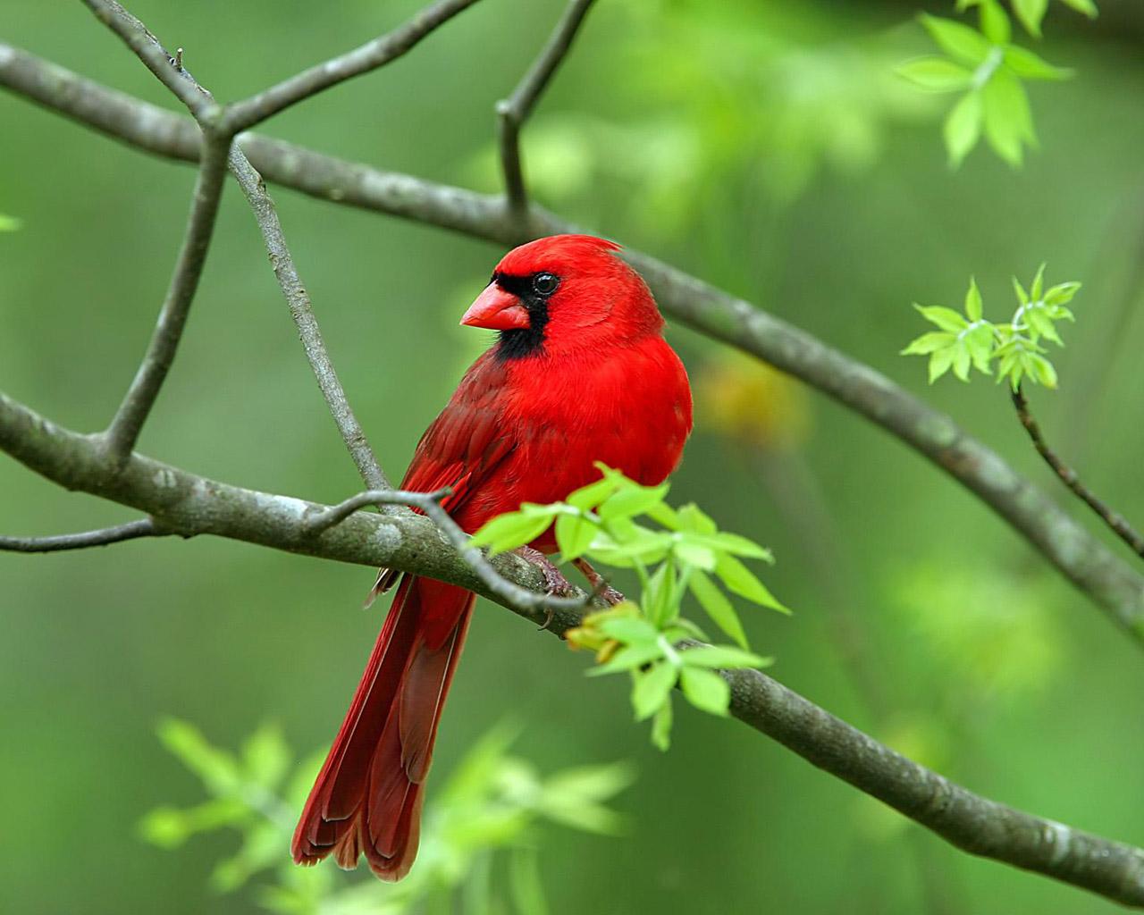 بالصور اجمل صور للعصافير , جمال العصافير تتجمع في هذه الصورة 3608 8