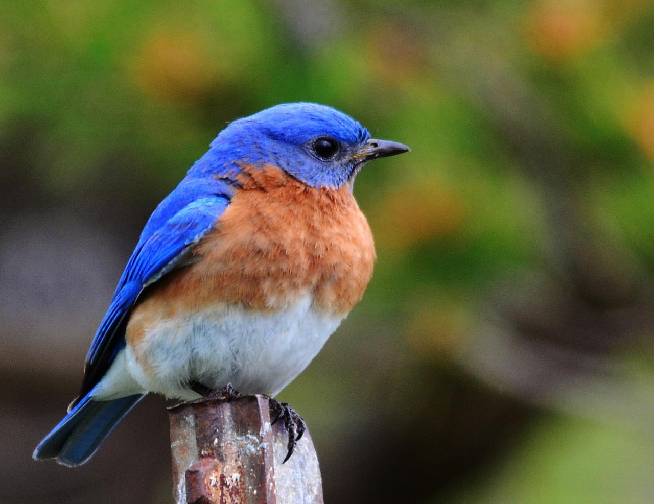 بالصور اجمل صور للعصافير , جمال العصافير تتجمع في هذه الصورة 3608 9