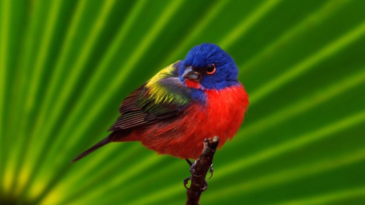 صورة اجمل صور للعصافير , جمال العصافير تتجمع في هذه الصورة