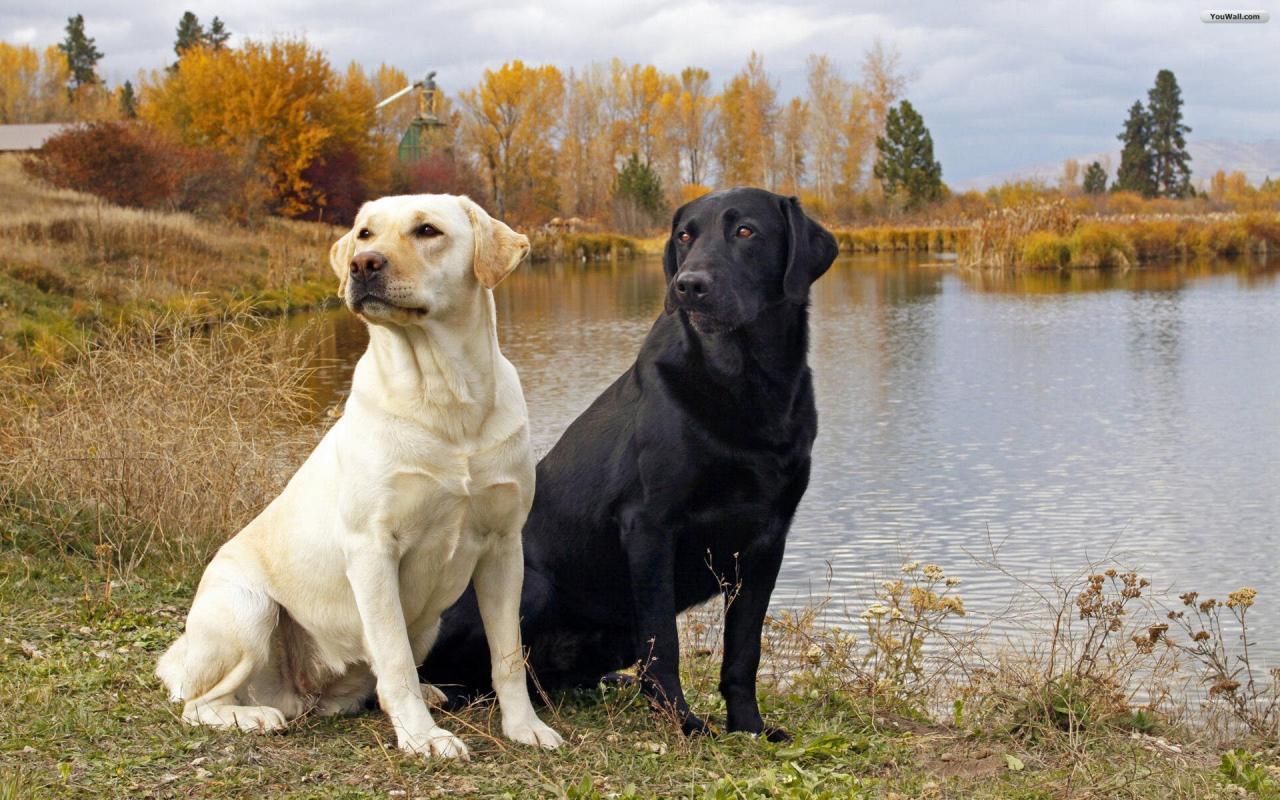 صور تفسير طرد الكلاب من المنزل , حلمت بكلب شكله قبيح
