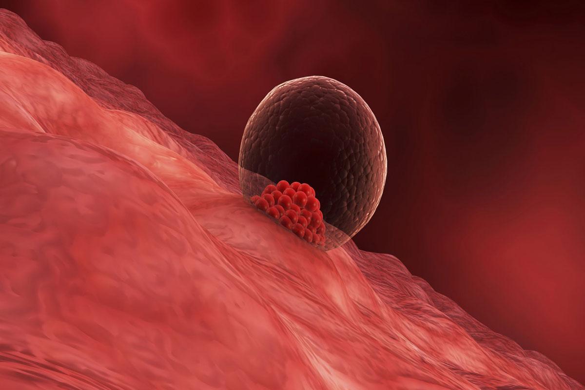 بالصور متى ينزل دم انغراس البويضة , ما هو دم انغراس البويضه 4642