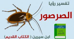 بالصور تفسير حلم صرصور , رويه الحشرات في المنام 2305 3 310x165