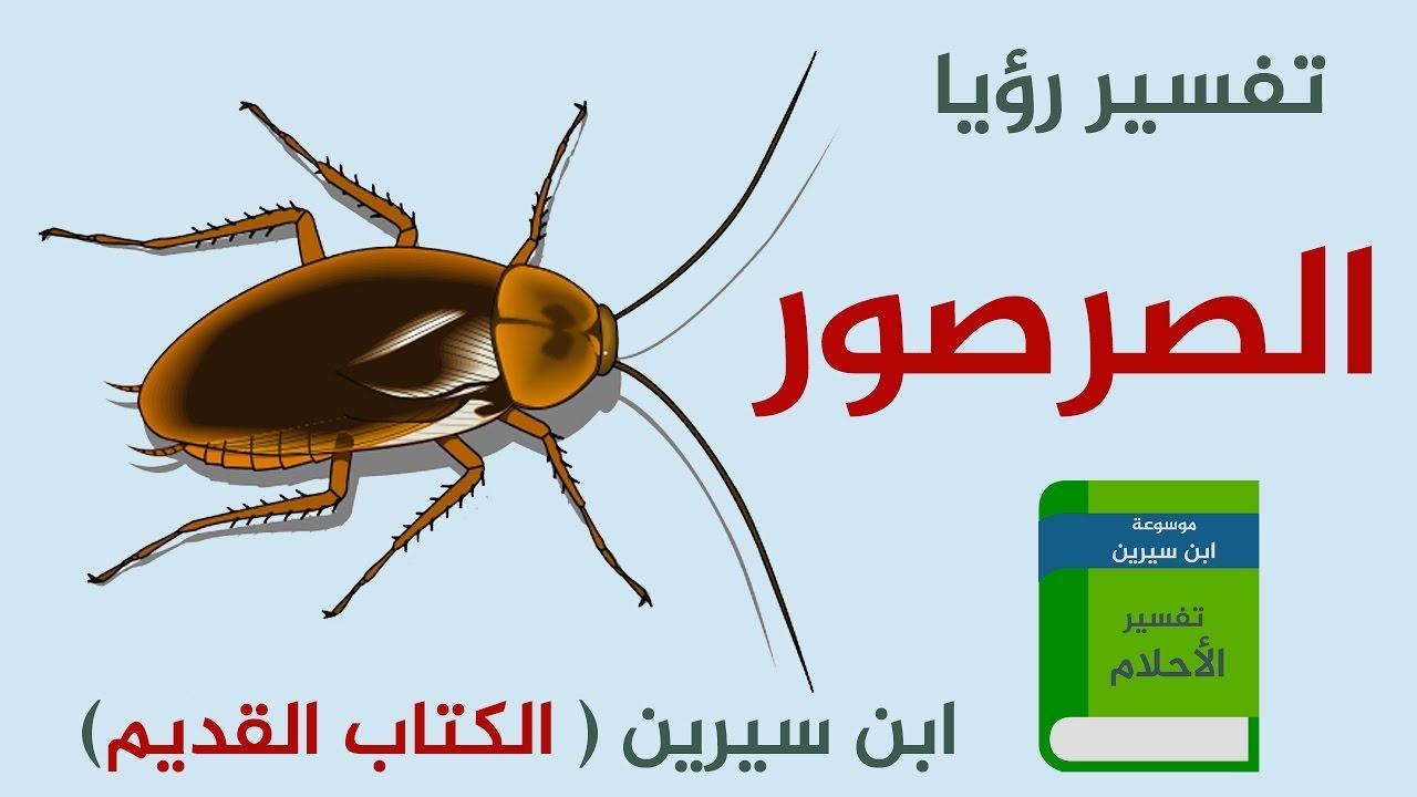 صورة تفسير حلم صرصور , رويه الحشرات في المنام