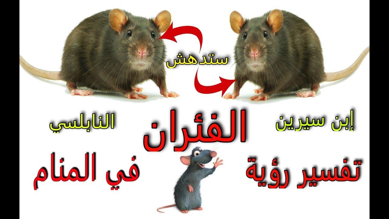بالصور تفسير حلم الفئران , وجود الفئران بالحلم للنابلسي 2314 2