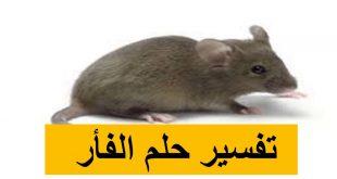 بالصور تفسير حلم الفئران , وجود الفئران بالحلم للنابلسي 2314 3 310x165