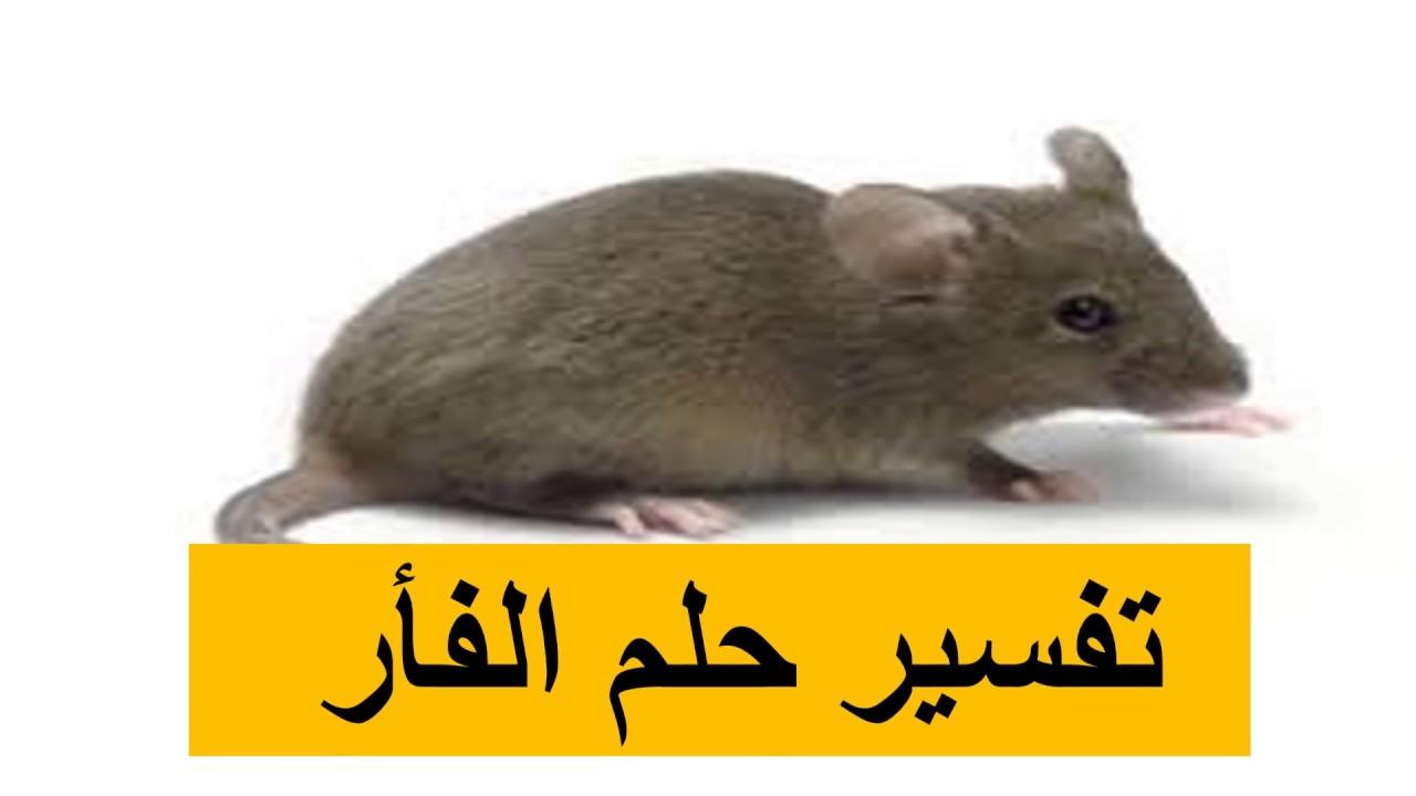 صورة تفسير حلم الفئران , وجود الفئران بالحلم للنابلسي