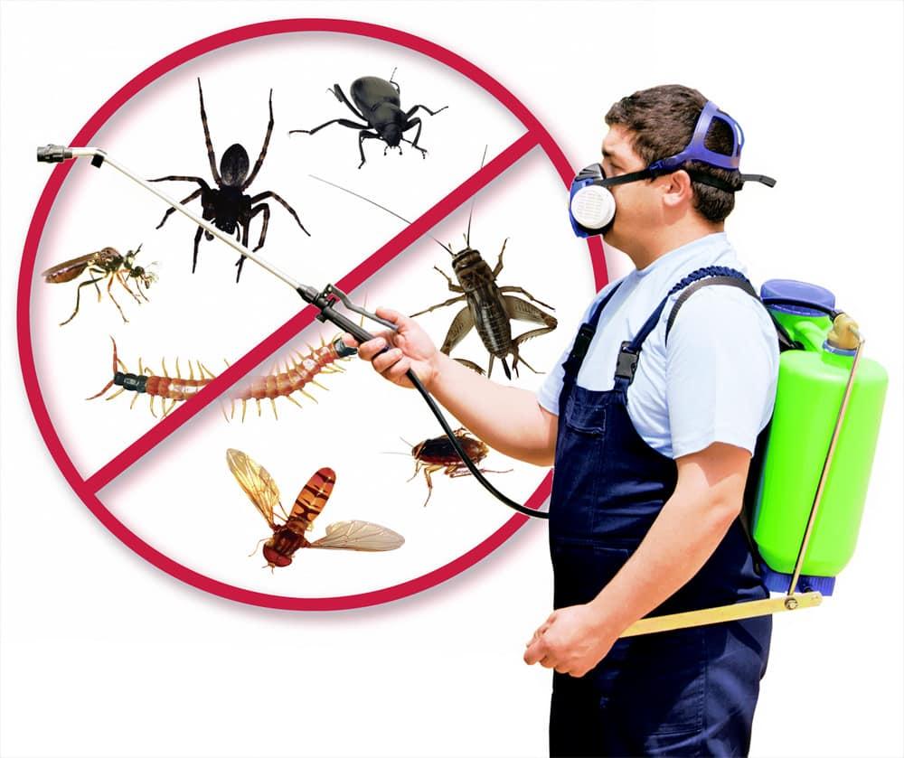 صور شركة مكافحة حشرات بالظهران , افضل شركه اباده الحشرات