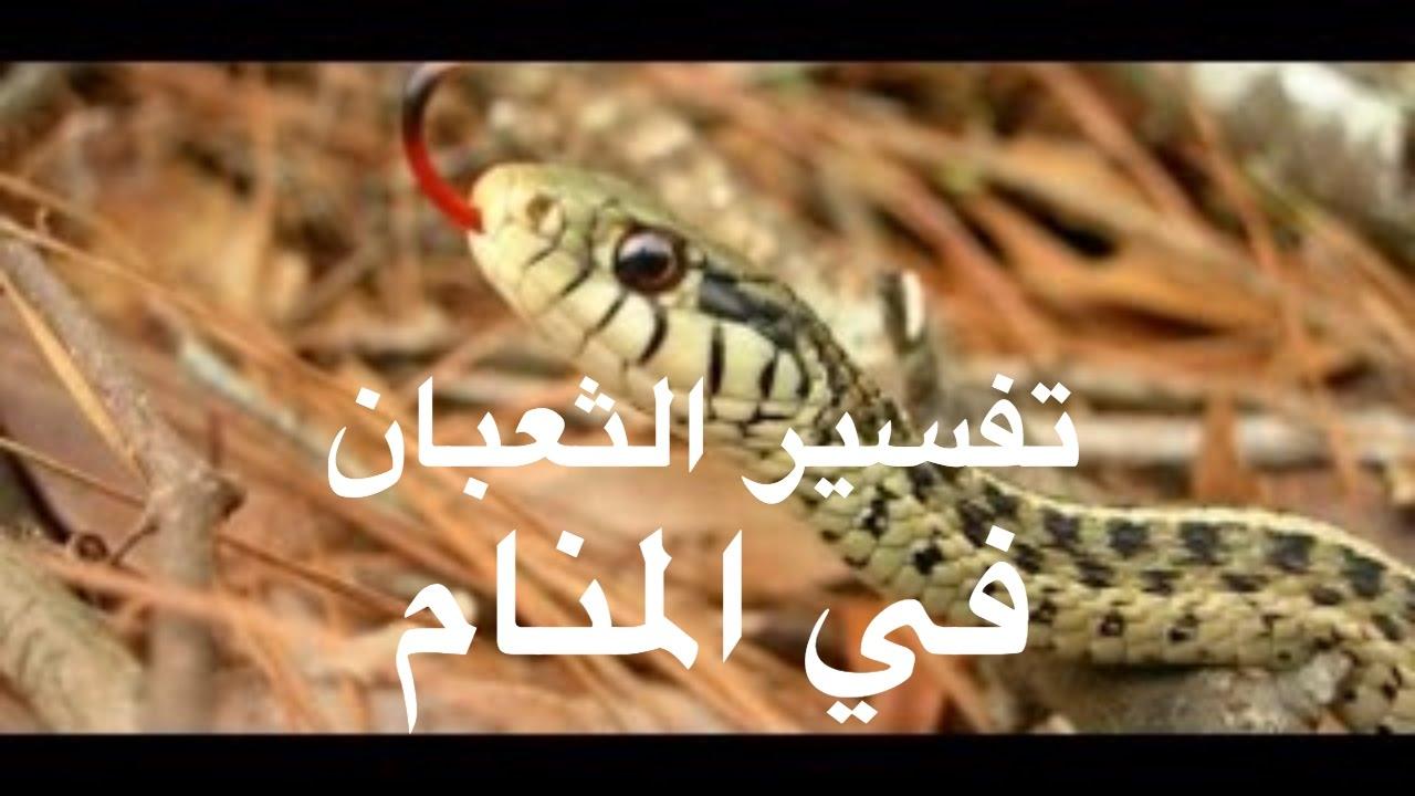 صورة الثعبان الاخضر في المنام , تفسير رؤيه الثعبان في المنام 2349 2