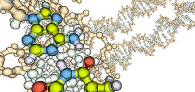 صورة ما هي الانزيمات , تعريف الانزيمات