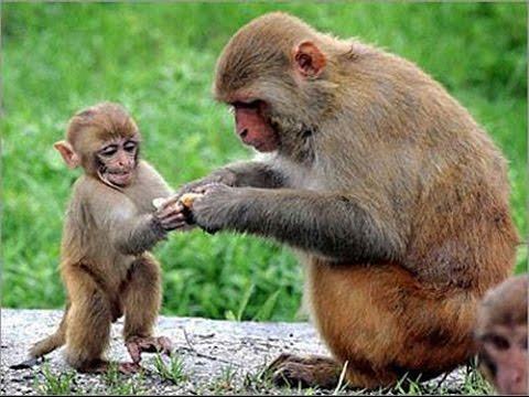 صور نكتة القرد والاسد , نكته القرد تضحك