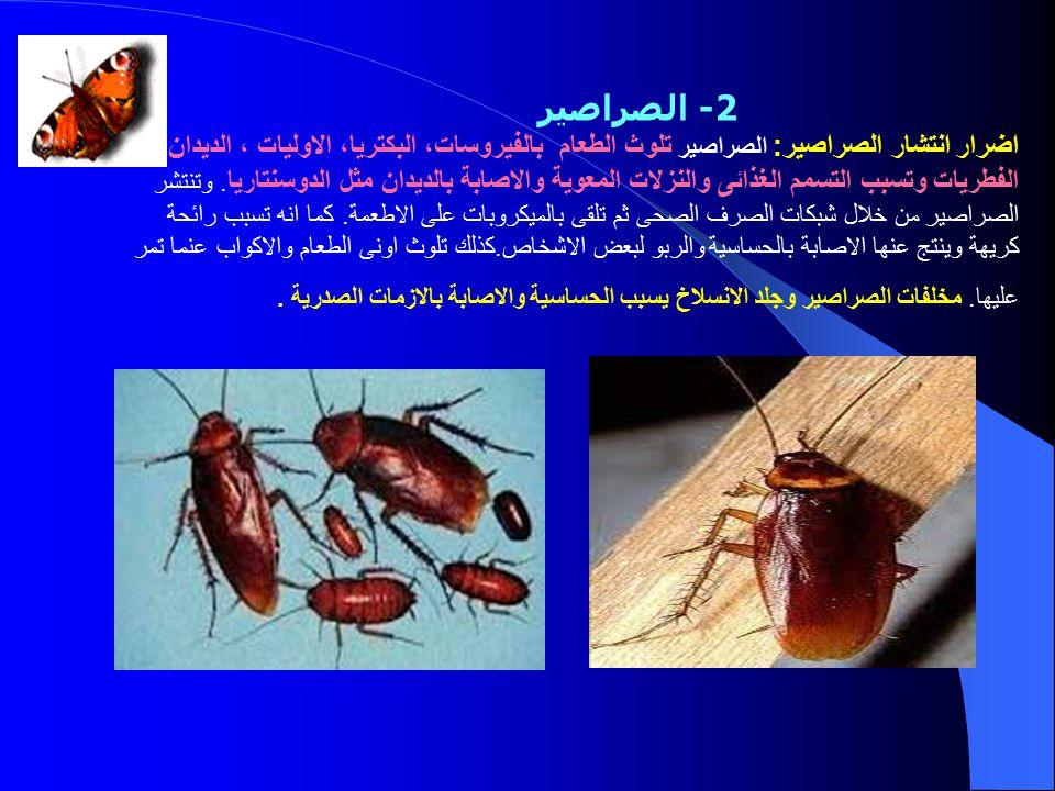 صورة علاج الصراصير الصغيرة في المطبخ , افضل طريقه لطرد الصراصير