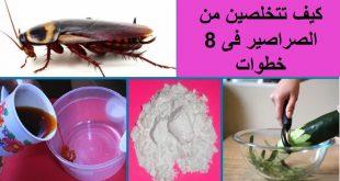 صور علاج الصراصير الصغيرة في المطبخ , افضل طريقه لطرد الصراصير
