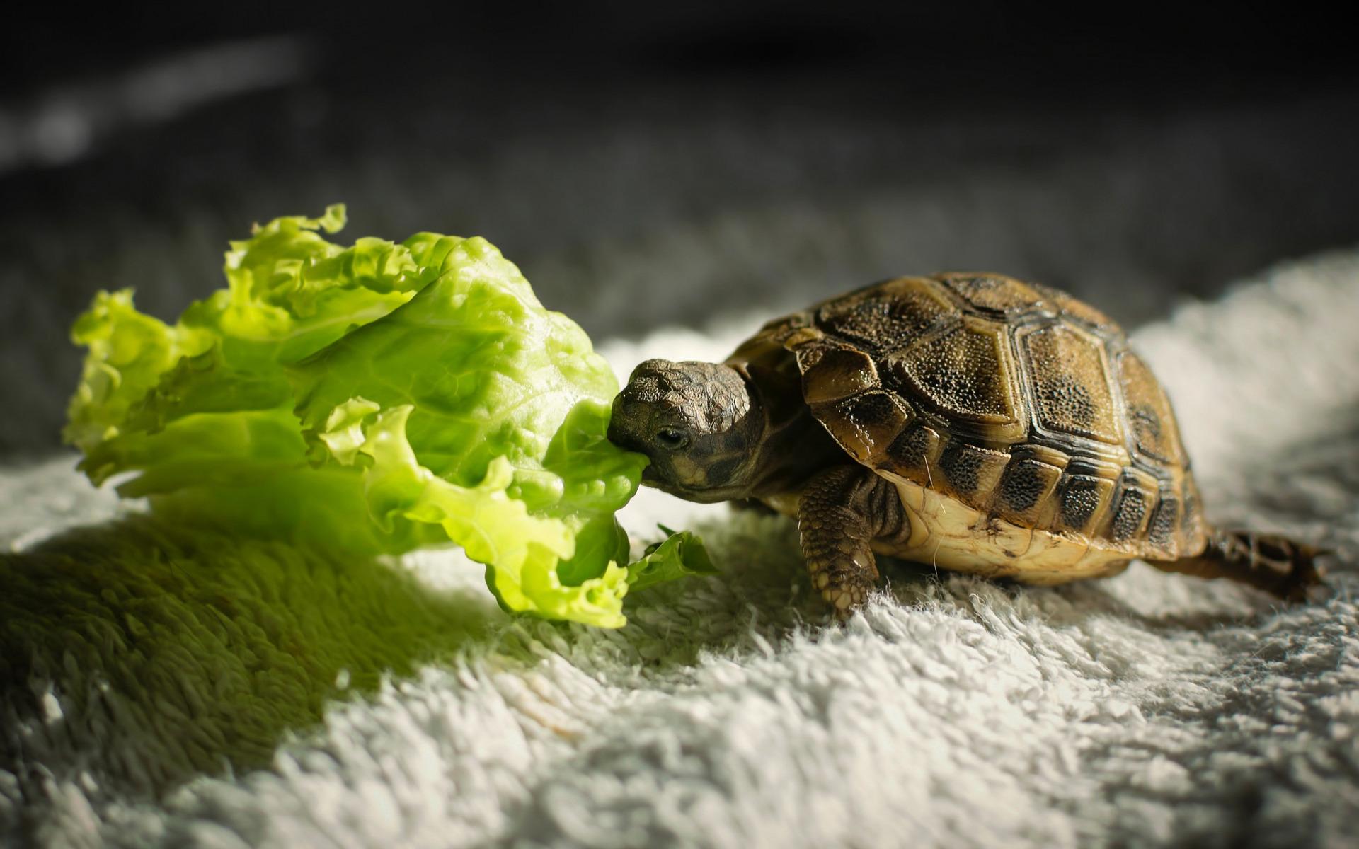 صورة صور سلاحف صغيرة , تعرف كيف تعيش السلاحف الصغيره
