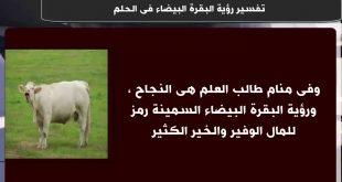 صور تفسير رؤية البقرة البيضاء في المنام , تفسير البقرة البيضاء فى الحلم