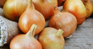صور فوائد البصل للجسم , تاثير البصل على الجسم