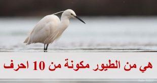 صور اسم طائر من 10 حروف , اصعب الالغاز واسهل الحلول