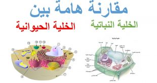 صور الفرق بين الخلية الحيوانية والنباتية , تعريف المصطلحات الصحيحة الخلية الحيوانية والخلية النباتية