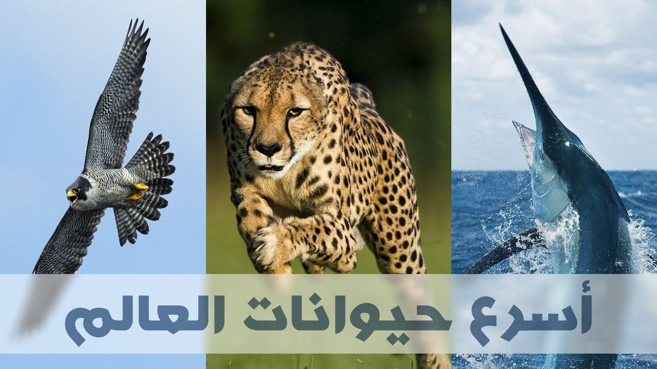 صور اسرع حيوان في العالم , اتعرف على اسرع الحيوانات في العالم