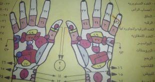 صور خريطة الجسم في اليد , اجهزه فى الجسم مرتبطة باليد