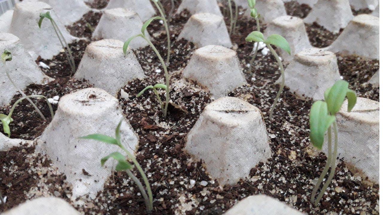 صورة طريقة زراعة بذور الورد , طريقه سهله لتنمو بذور الورد