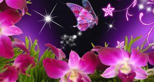صور صور فراشات حب , اجمل الالوان الفراشات بالصور