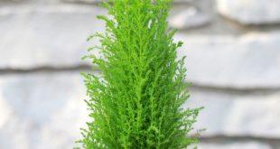 صورة اسماء نباتات الزينة وصورها , اجمل الصور للبناتات الزينة المعبرة عن الطبيعية
