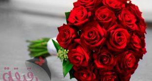 صورة صور ورد رقيقه , اجمل صور الورود الرقيقة