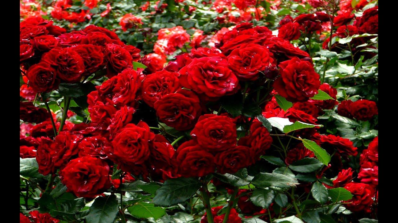صورة صور انواع الزهور , انواع كثير من الزهور بالصور