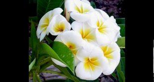 صور صور انواع الزهور , انواع كثير من الزهور بالصور