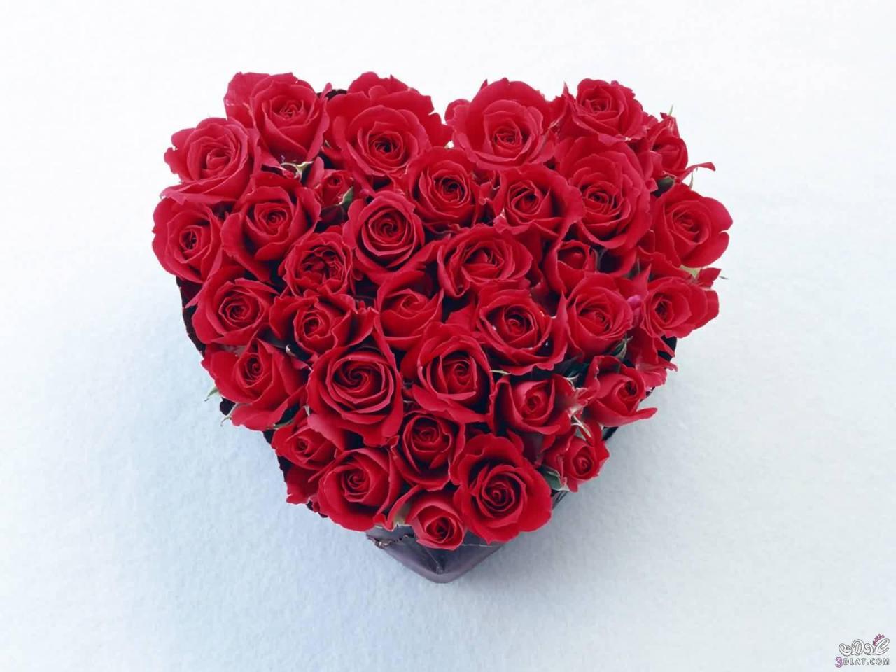صورة صور قلوب ورد , اجمل صور قلوب ورود