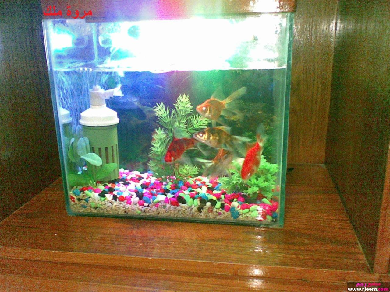 صورة صور حوض السمك , اجمل اشكال لاحواض سمك الزينة