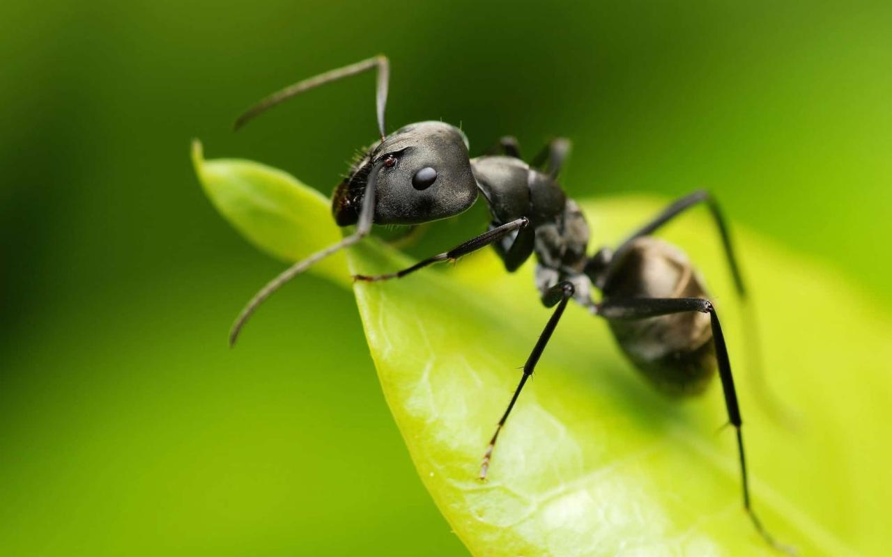 صورة تفسير حلم النمل الكثير , رؤيه النمل في المنام