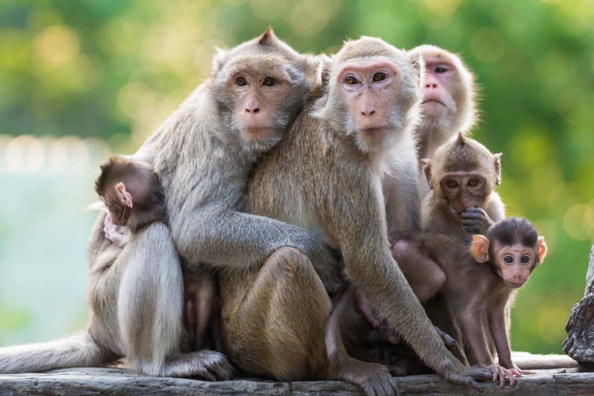 صورة تفسير حلم القرد , حلمت اني رايت القرد